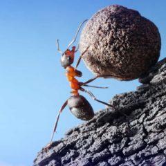 מדעי המוטיבציה: מה גורם לנו לעבוד? (ומה לא) – מחקר