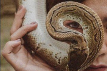 צדקה תציל ממוות: בתו של ר' עקיבא והנחש