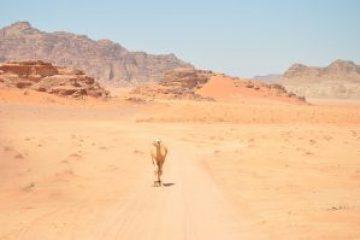 מקום טוב למצוא או לאבד את עצמך: 10 ציטוטים יפים על המדבר