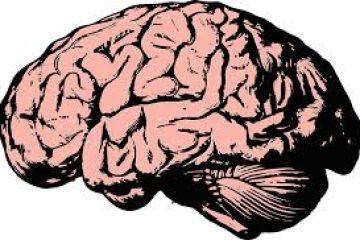 מהי הטרמה ואיך היא קשורה לזיכרון ולמידה?
