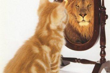 קרב התסכול הגדול: מי שאני vs. מי שאני רוצה להיות